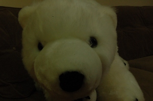 The polar bear up close